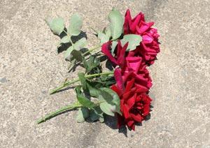 バラの花の切り戻し