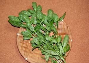 収穫したスイートバジルの茎と葉