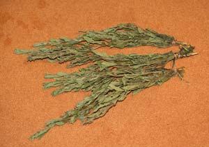 乾燥させたドライのステビアの葉