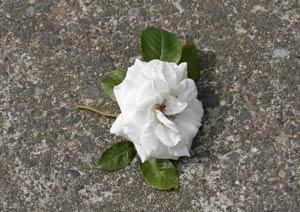 アンナプルナの花の切り戻し