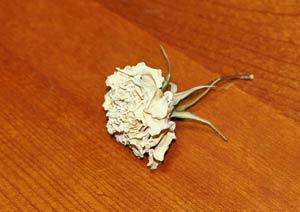 アンナプルナの花のドライフラワー