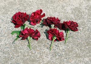 黒真珠の花の切り戻し