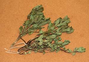 乾燥させたオーデコロンミントの葉
