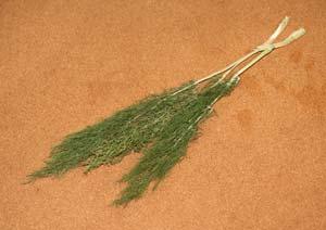 スイートフェンネルの葉を乾燥させる