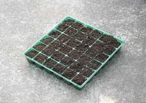 青シソの種蒔き